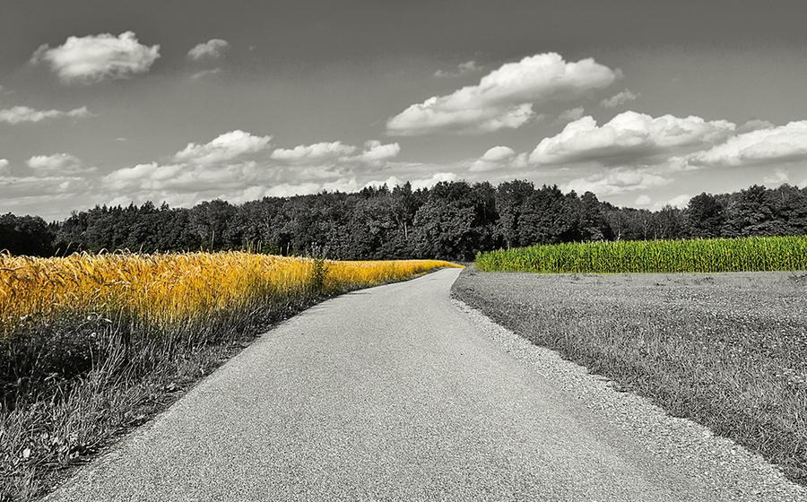 Landscape of Crops